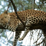 Animal Print: a zebra e o leopardo são os animais do verão 2013.