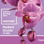 Para se inspirar: orquídea radiante, a cor de 2014.