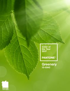 pantone_color_greenery_cor_do_ano_2017-2