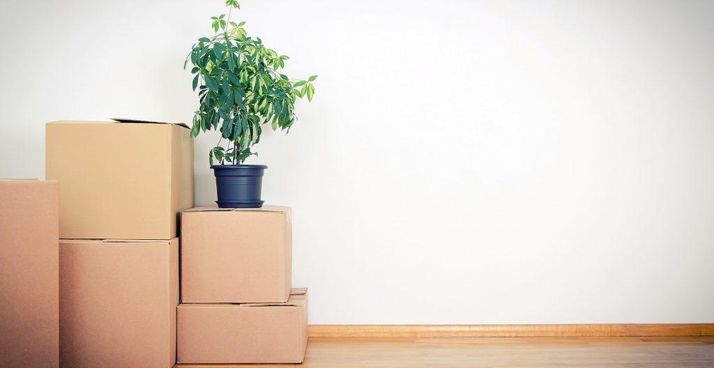 mudanças_novo_apartamento_novo_layout_nova_marca_por_alessandra_faria2