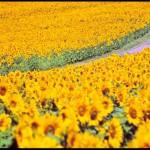 Amarelo: só quero que você me aqueça neste verão!