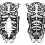 Diastase durante a gravidez e no pós parto.