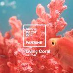 Living coral Pantone color 2019!